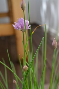 Chives from the Garden