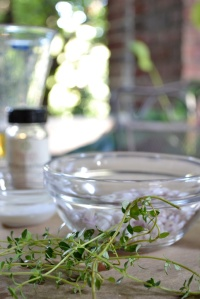 Fresh lemon thyme from the garden