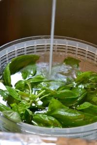 Rinsing the basil